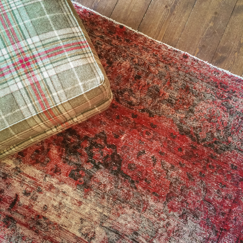 Mould And Dry Rot In Rugs