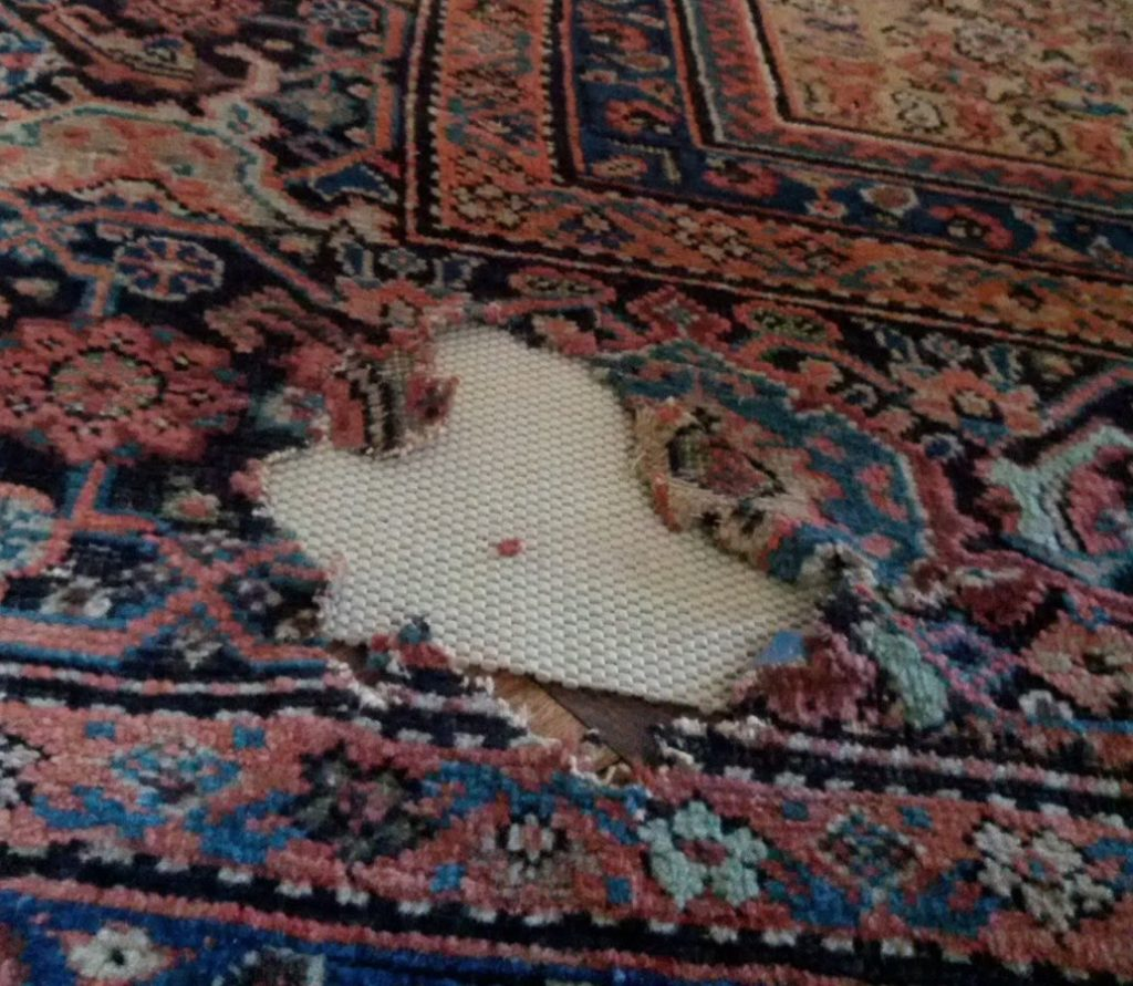 rug rot